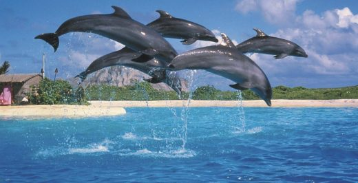 five dolphins jumping above body of water