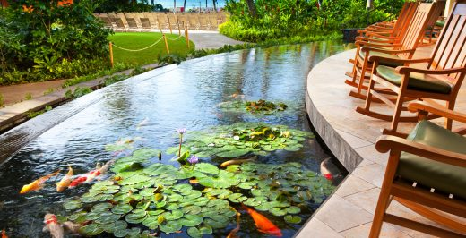 koi fishes and lily pads at pod
