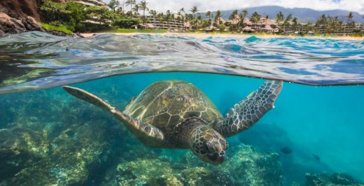 turtle under body of water