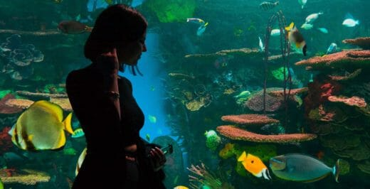 woman standing near large aquarium