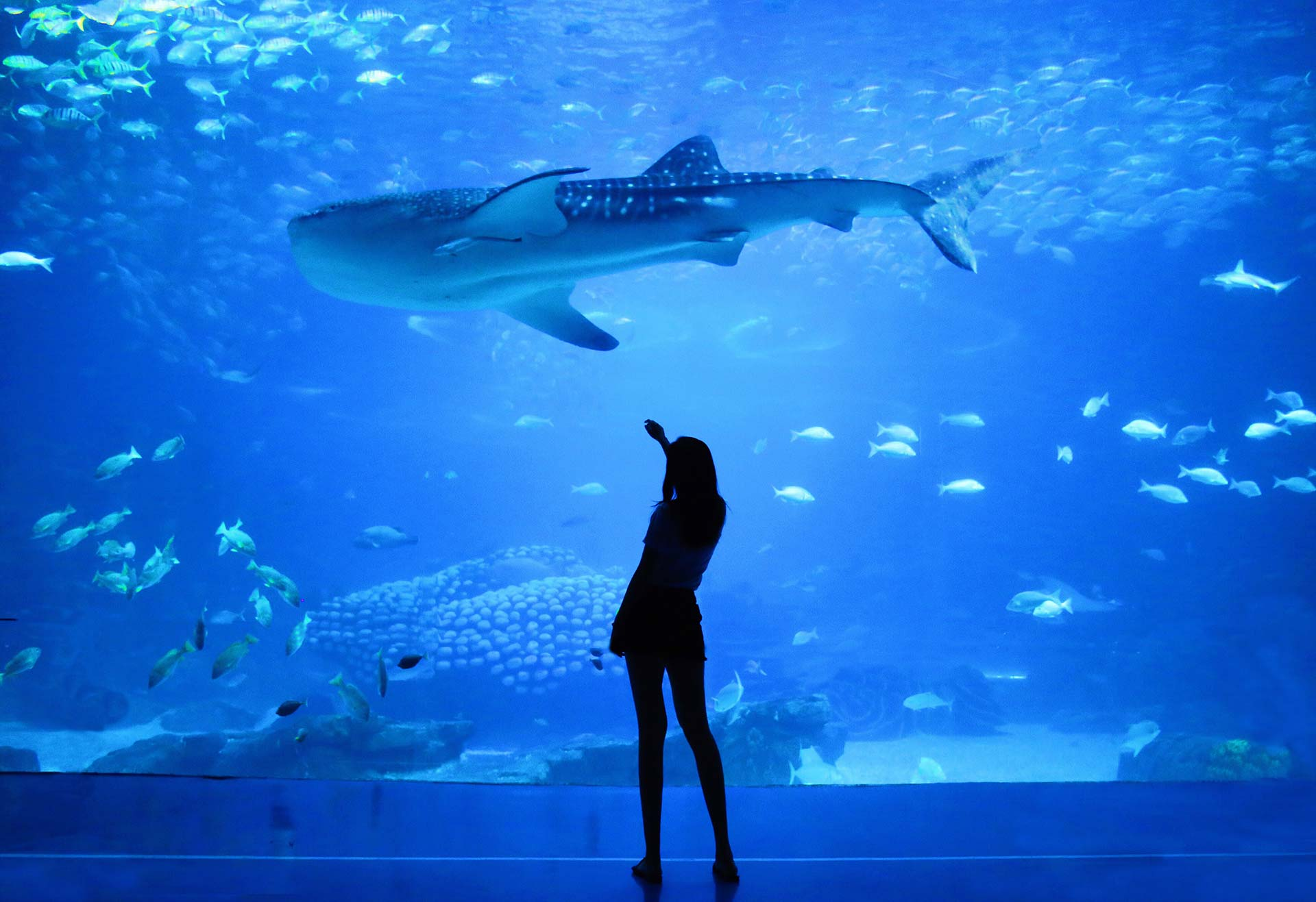 woman standing on beside aquarium